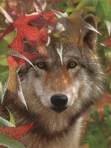 Wolf - Autumn Encounter art print by Collin Bogle for $41.25 CAD