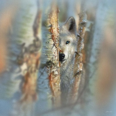 Wolf - Focused art print by Collin Bogle for $48.75 CAD