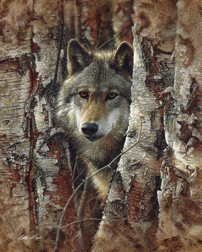 Wolf - Woodland Spirit art print by Collin Bogle for $40.00 CAD