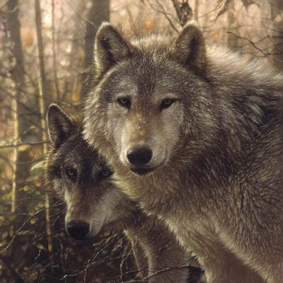Wolves - Woodland Companions art print by Collin Bogle for $48.75 CAD