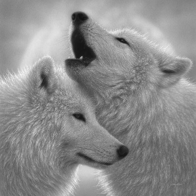Wolves - Love Song - B&W art print by Collin Bogle for $48.75 CAD