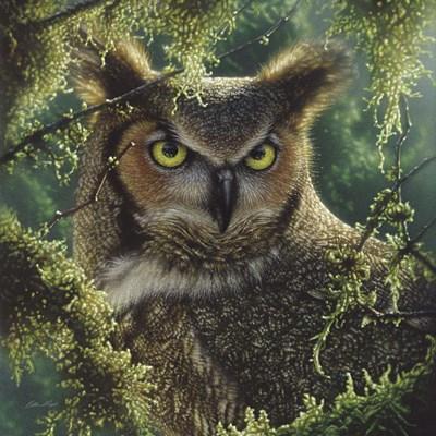 Great Horned Owl - Watching and Waiting art print by Collin Bogle for $48.75 CAD