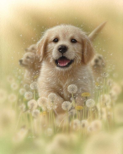 Golden Retriever Puppy - Dandelions art print by Collin Bogle for $40.00 CAD