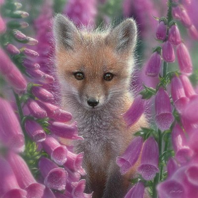 Red Fox - Foxgloves - Square art print by Collin Bogle for $48.75 CAD
