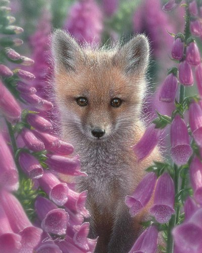 Red Fox - Foxgloves art print by Collin Bogle for $40.00 CAD