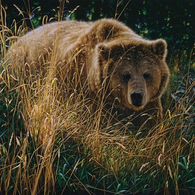 Brown Bear - Crossing Paths art print by Collin Bogle for $48.75 CAD