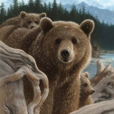 Brown Bears - Backpacking - Square art print by Collin Bogle for $48.75 CAD