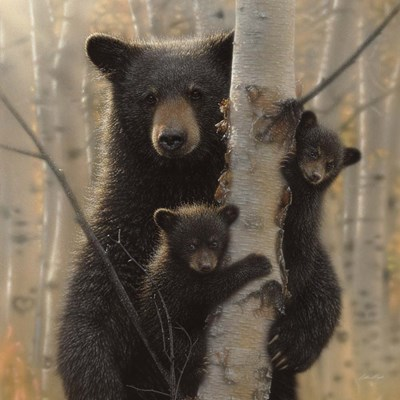 Black Bear Mother and Cubs - Mama Bear art print by Collin Bogle for $48.75 CAD
