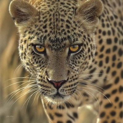 Leopard - On the Prowl - Square art print by Collin Bogle for $48.75 CAD