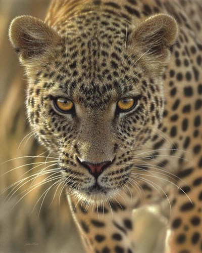 Leopard - On the Prowl art print by Collin Bogle for $40.00 CAD