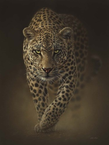 Leopard - Savage art print by Collin Bogle for $41.25 CAD