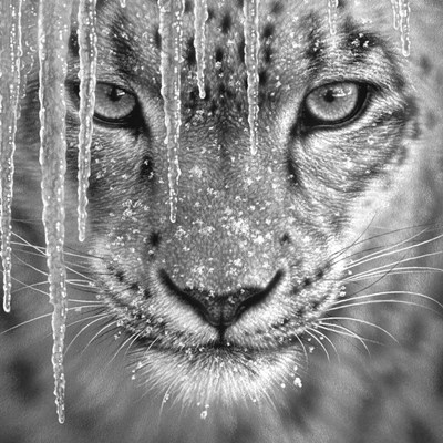 Snow Leopard - Blue Ice - B&W art print by Collin Bogle for $48.75 CAD