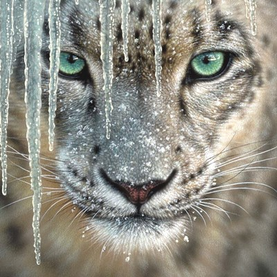 Snow Leopard - Blue Ice art print by Collin Bogle for $48.75 CAD