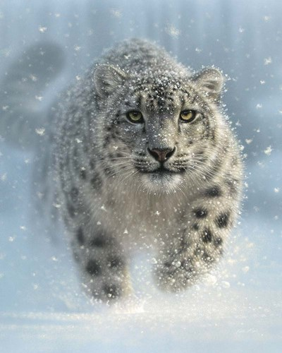 Snow Leopard - Snow Ghost - Vertical art print by Collin Bogle for $40.00 CAD