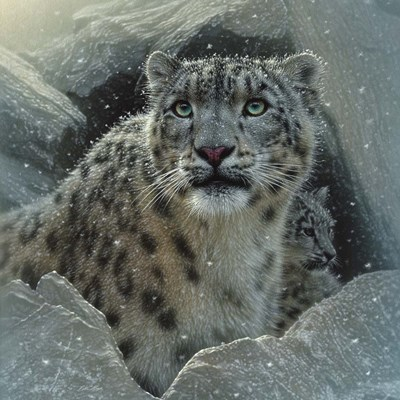 Snow Leopard - The Fortress art print by Collin Bogle for $48.75 CAD
