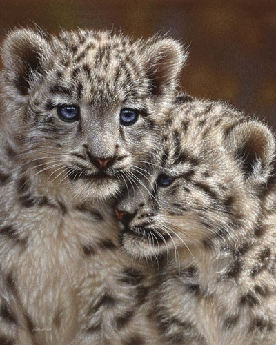 Snow Leopard Cubs - Playmates art print by Collin Bogle for $40.00 CAD