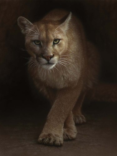 Cougar - Emergence art print by Collin Bogle for $41.25 CAD