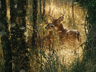 Whitetail Deer - A Golden Moment - Horizontal art print by Collin Bogle for $41.25 CAD