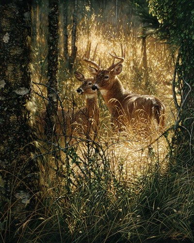 Whitetail Deer - A Golden Moment art print by Collin Bogle for $40.00 CAD