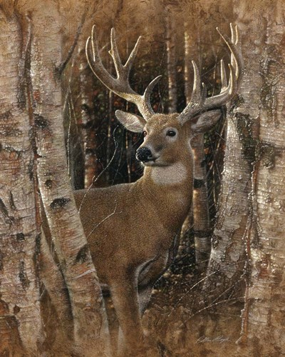 Whitetail Deer - Birchwood Buck art print by Collin Bogle for $40.00 CAD