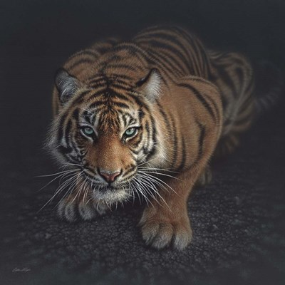 Crouching Tiger art print by Collin Bogle for $48.75 CAD