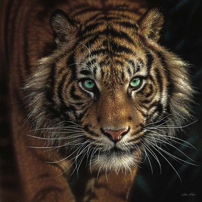 Eye of the Tiger - Square art print by Collin Bogle for $48.75 CAD