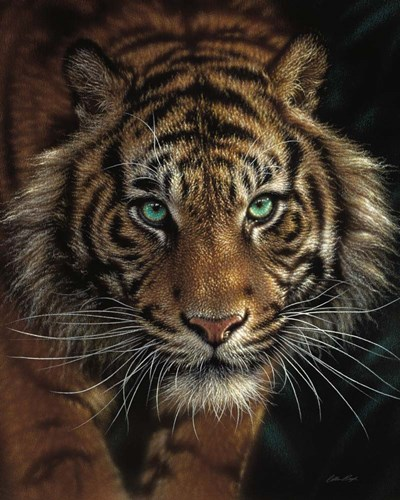 Eye of the Tiger art print by Collin Bogle for $40.00 CAD