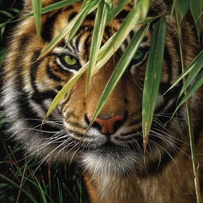 Tiger - Emerald Forest art print by Collin Bogle for $48.75 CAD