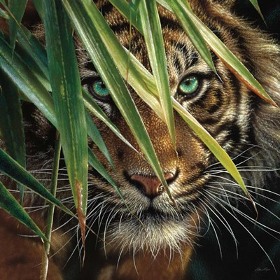 Tiger Eyes art print by Collin Bogle for $48.75 CAD