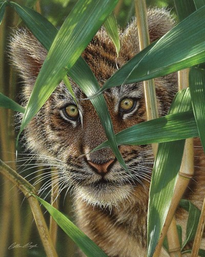 Tiger Cub - Peekaboo art print by Collin Bogle for $40.00 CAD