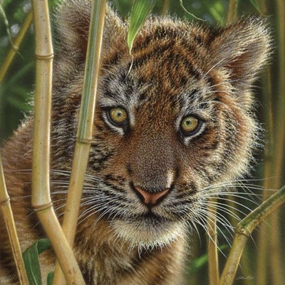 Tiger Cub - Discovery art print by Collin Bogle for $48.75 CAD