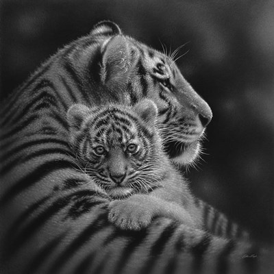 Tiger Mother and Cub - Cherished - B&W art print by Collin Bogle for $48.75 CAD