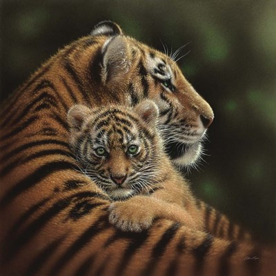 Tiger Mother and Cub - Cherished art print by Collin Bogle for $48.75 CAD