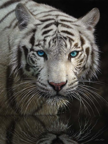 White Tiger - Into the Light art print by Collin Bogle for $41.25 CAD