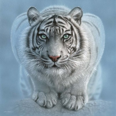 White Tiger - Wild Intentions Square art print by Collin Bogle for $48.75 CAD