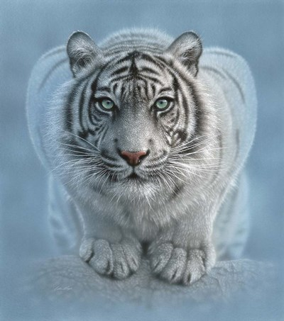 White Tiger - Wild Intentions art print by Collin Bogle for $52.50 CAD