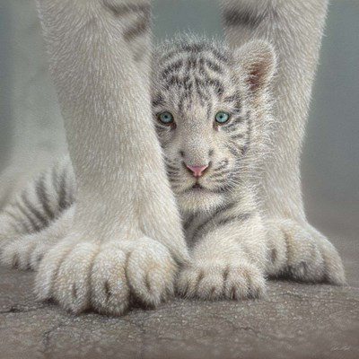 White Tiger Cub - Sheltered art print by Collin Bogle for $48.75 CAD
