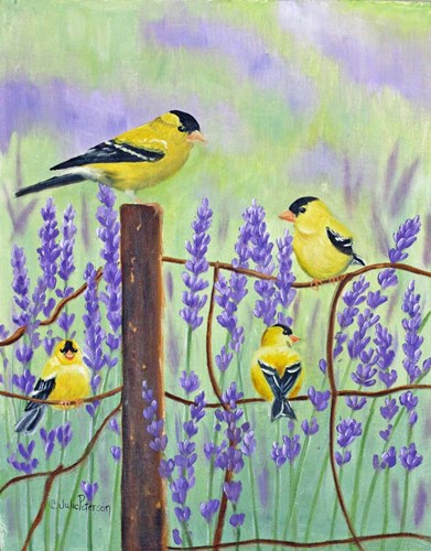 Gold Finch & Lavender art print by Julie Peterson for $40.00 CAD