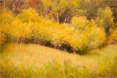 Fall Thicket art print by Ramona Murdock for $43.75 CAD