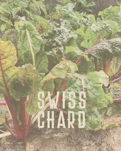 Swiss Chard art print by Tammy Apple for $40.00 CAD