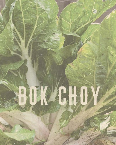 Bok Choy art print by Tammy Apple for $40.00 CAD