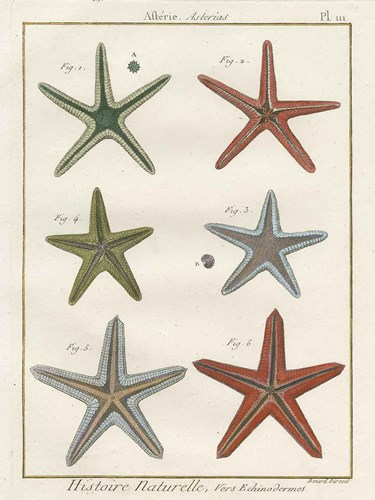 Histoire Naturelle Starfish II art print by Wild Apple Portfolio for $61.25 CAD