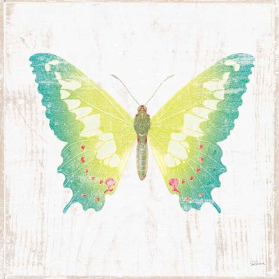 White Barn Butterflies III art print by Sue Schlabach for $36.25 CAD