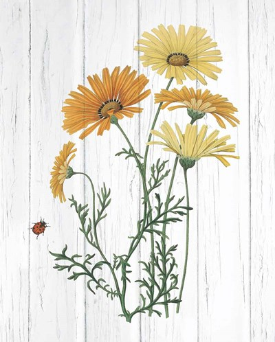 Botanical Bouquet on Wood I art print by Wild Apple Portfolio for $58.75 CAD