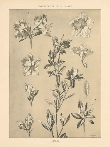 Lithograph Florals I art print by Wild Apple Portfolio for $42.50 CAD