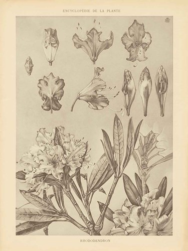 Lithograph Florals IV art print by Wild Apple Portfolio for $42.50 CAD