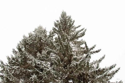 Snow on Treetops art print by Sue Schlabach for $65.00 CAD