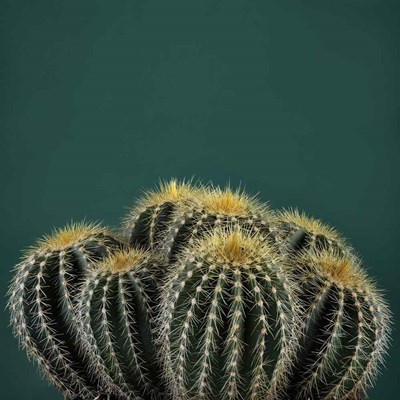 Cacti I art print by Andre Eichman for $51.25 CAD