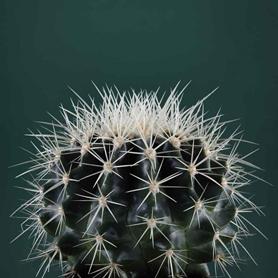 Cacti II art print by Andre Eichman for $51.25 CAD