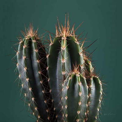 Cacti IV art print by Andre Eichman for $51.25 CAD